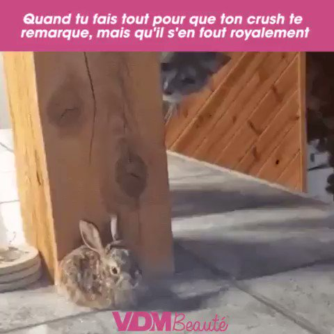 Coucou ! Dis, dis, dis... tu me vois, là ? Alleeeezzzzzz... #VDM #viedemerde #love #LOL