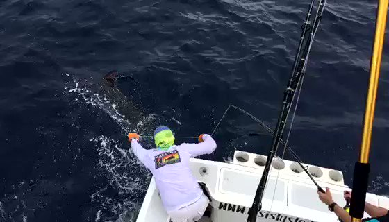 Matapalo, CR - Maestro went 22-29 on Blue Marlin over 2-Days. #BillfishADay