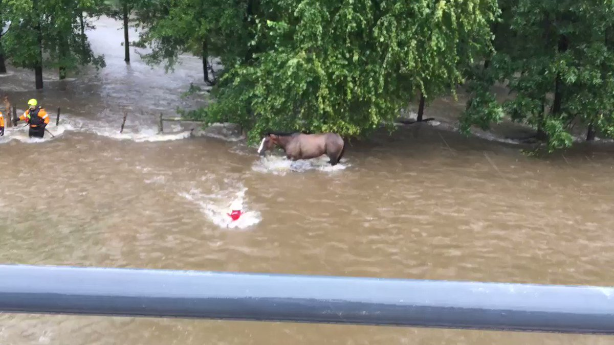 Happy to report the horse was rescued by College Station firefighters!!