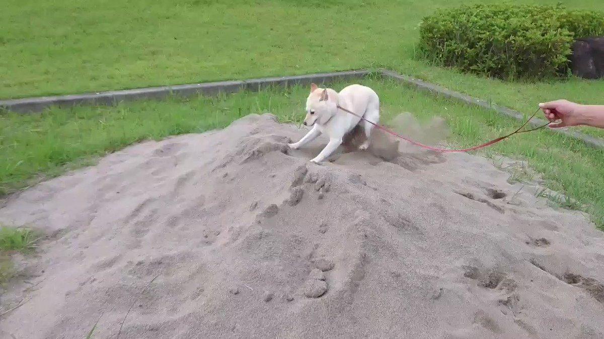 砂場で発狂。その後、我にかえる😄 pic.twitter.com/MMDKL4eOHx