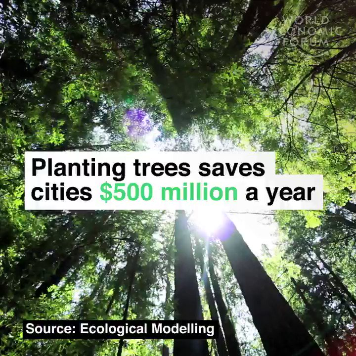 why planting a tree could save Home » learn » how to plant » planting video watch this video before you start planting these are instructions for planting a 5 gallon tree.