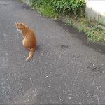 人懐っこい猫の悩殺ポーズに胸キュンそんな姿に犬はたじたじ??