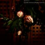 昨晩の月下美人開花した夜から閉じる朝まで。 pic.twitter.com/1VK2SWKRvD