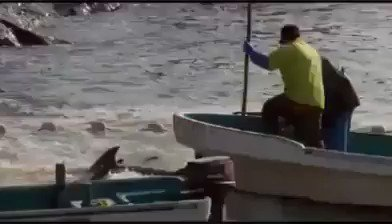 #¥ᄂᆰ¥ワᄚ # ̄ツᄂ ̄テᆱ ̄ツᆱ ヒᄅ ̄ツハ ᆲᆲ¦ᄎフ¥ロ゙ (¥ミネ│ᄄネ¥ロロ¥ロ゙ᄐノ #Taiji #dolphin drive hunts Part 2 of 4 # ̄ツᄂ ̄テᆱ ̄ツᆱ¥ᄂᄅ¦ᄑ https://t.co/qulAMbfn6O https://t.co/f4K3B2eE8X
