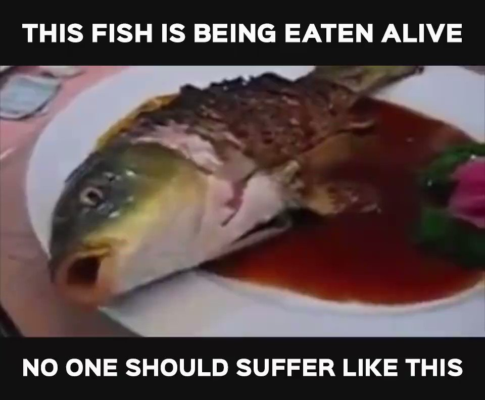RT @peta: RETWEET if you know this is WRONG 💔 https://t.co/tdUNO9PlsW