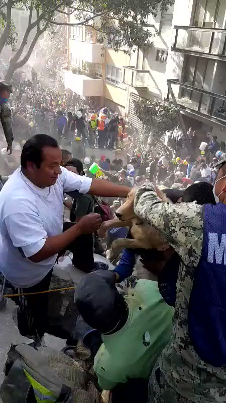 RT @charlemange93: Saving a dog from the rubble. #MexicoCityearthquake https://t.co/CGHAEZjiyT