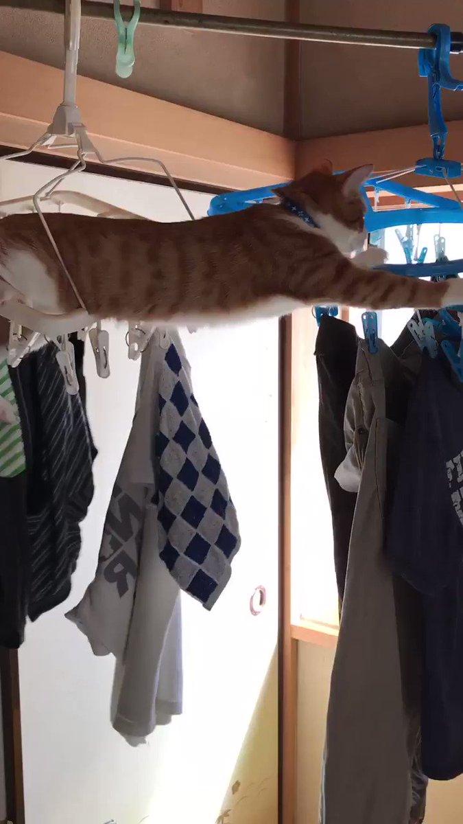 モグ🐱☘️ 今日の悪行😈干したばかりの洗濯物を叩き落とすという技を発動💨しました💧  やーめーてーーーーー‼️ (´っω・*)゚・。