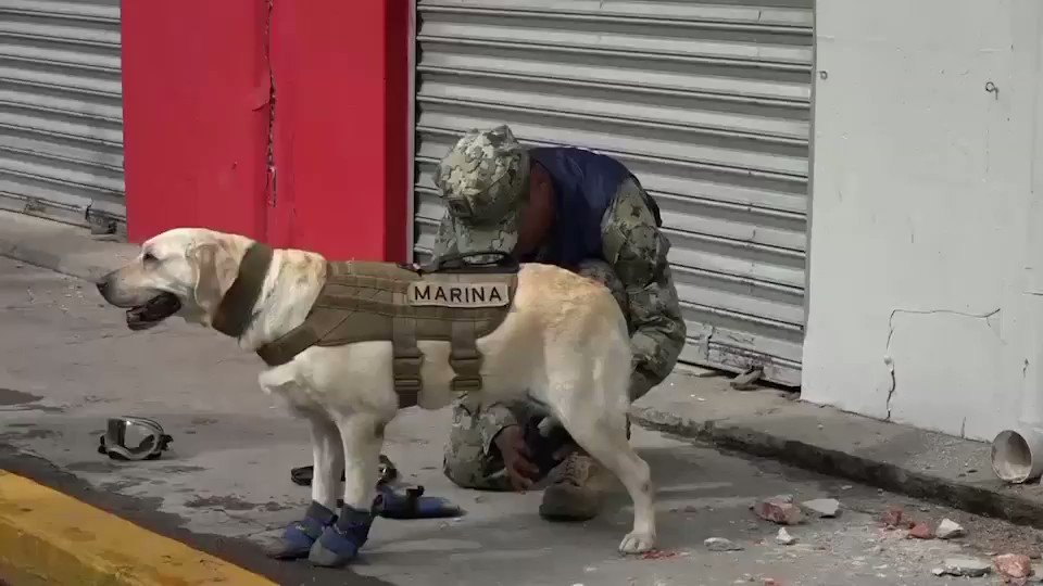 FRIDA Y LOS BINOMIOS CANINOS: ALGUNOS DE LOS HÉROES DEL RESCATE TRAS LOS SISMOS EN MÉXICO