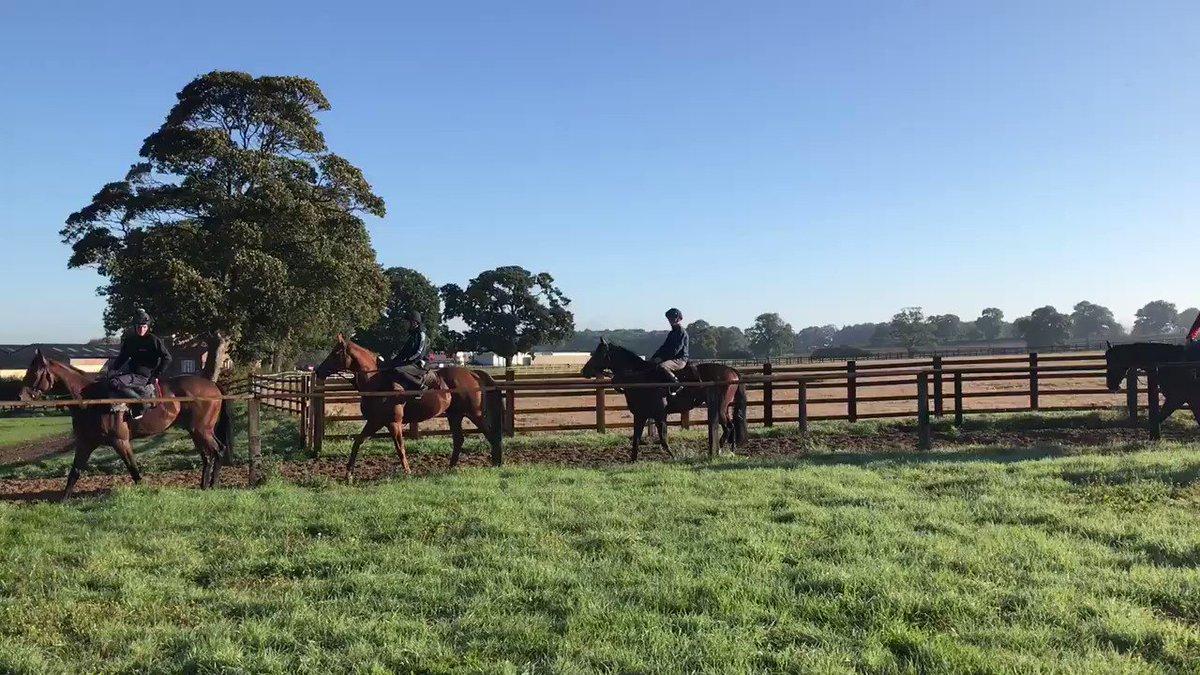 Nice fresh morning at Willow farm! #autumnshere #racing