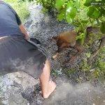 涙なしでは見られない!溺れる仔犬を助けようとする母犬の姿に感動!