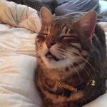 くしゃみが出そうな顔をしている猫って可愛すぎるでも見ているとむずむずする