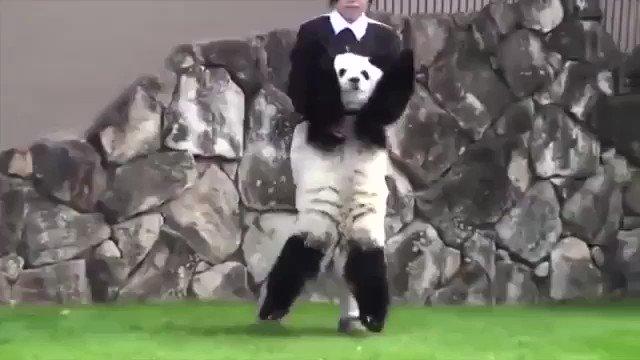 自分から落ちていったのに飼育員さんに助けを求めるパンダがかわいすぎる