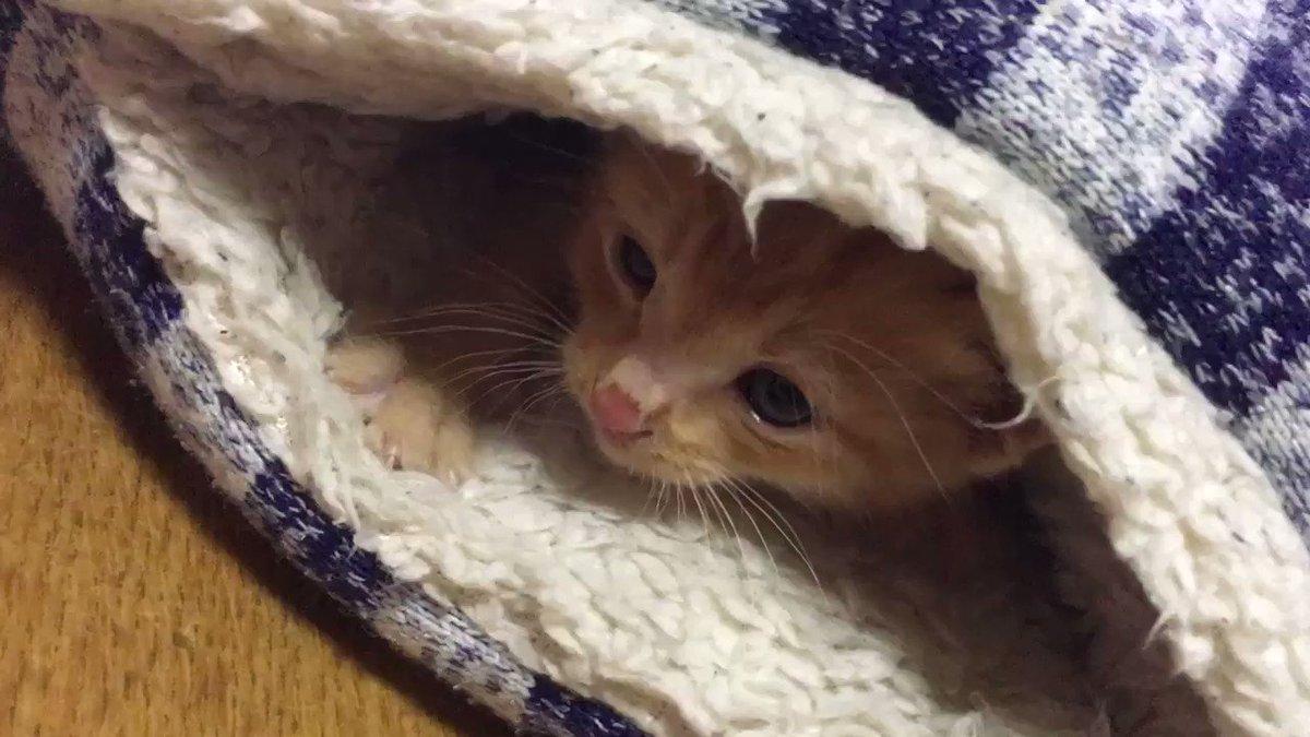 猫がめちゃめちゃ赤ちゃんんときのめちゃめちゃ最高の動画みてもらっていいすか pic.twitter.com/rx7UF4pXSD