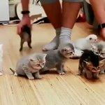 幼稚園の先生を要約した映像/子猫のお世話・色んな子がいます!