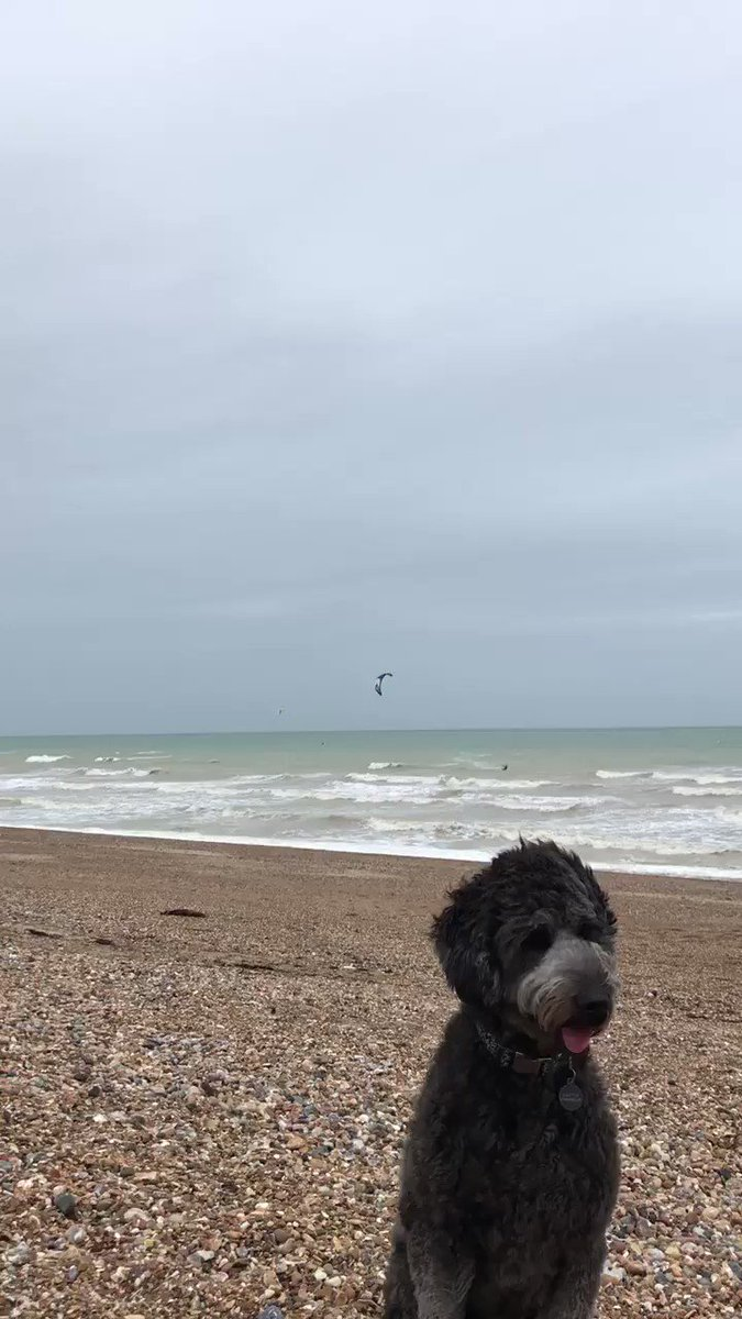 Windy woo on the beach. Tried to film the kite surfers 🏄 flying through the air but the dog had other ideas #Shoreham