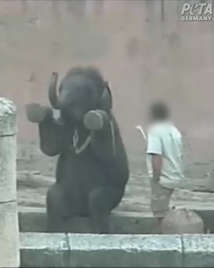 'How can they do this to baby elephants? ' mobile.twitter.com/peta/status/91…