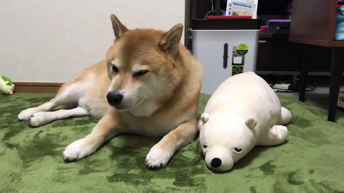 柴犬が寝る時間だよ pic.twitter.com/0QgIBoiJyK