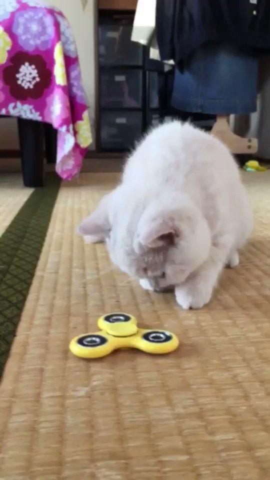 ぬいぐるみがハンドスピナーで遊んでる?🤔 pic.twitter.com/lmSBHta9dp