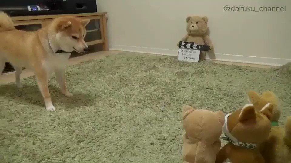 ま、マネすんなよ〜🐶💢やめろよー💦Dont mimic meぜひ音ありで見て笑ってください!!#笑ったら寝ろ#柴犬だいふくベストセレクション pic.twitter.com/FIMKDtSYui