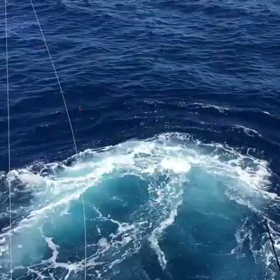 Cabo, MX - Team Galati released a Blue Marlin and a Striped Marlin.