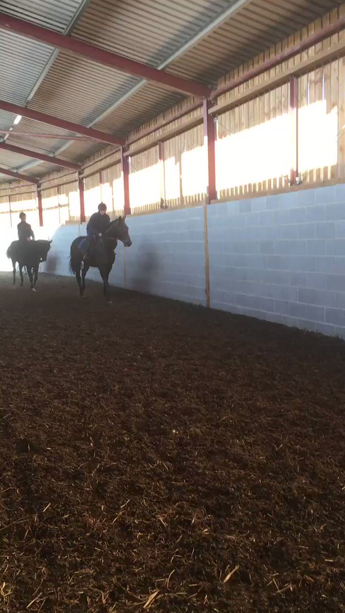 A couple of Garswood yearlings 3rd & 4th having a light exercise in the school this morning
