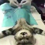 あるはずのものが無い?www猫のビックリ顔で笑わずにはいられないwww