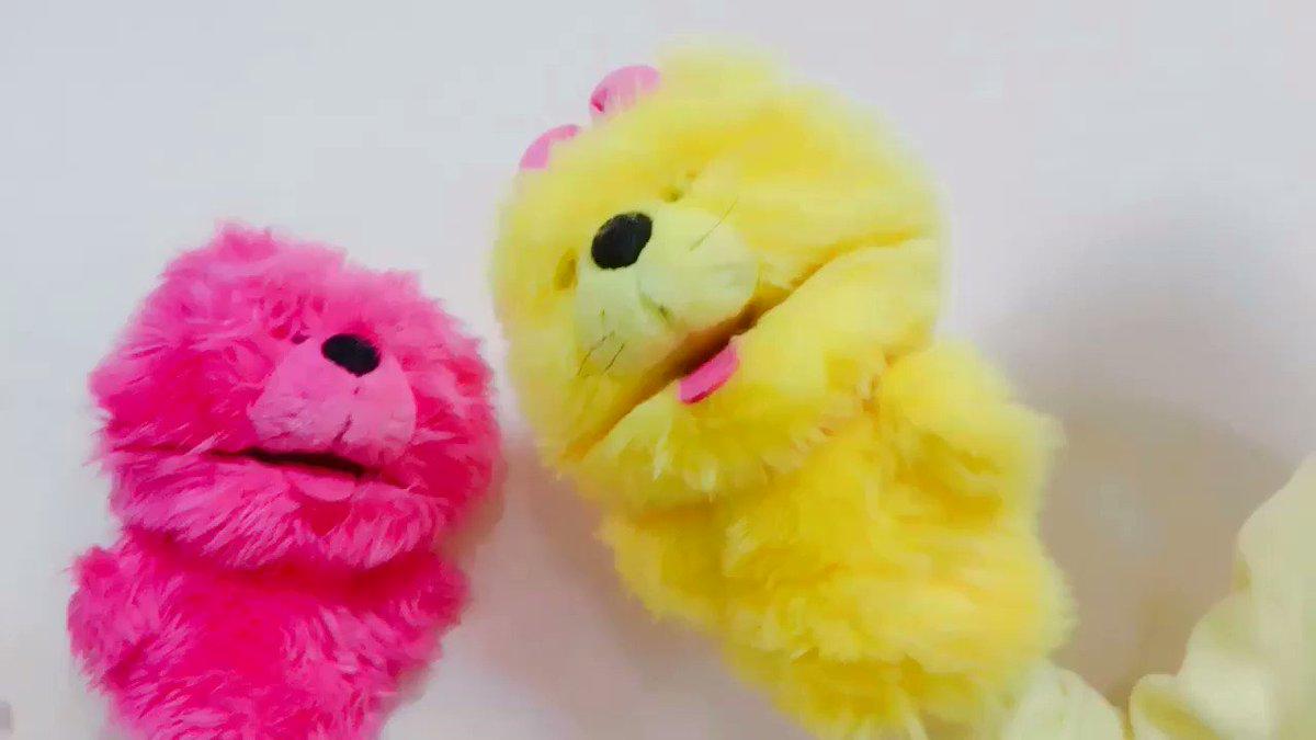 アベーノアベーノ(ピンク)、ハレコ(黄色)、ノンシュガー(グレー)と遊びました。