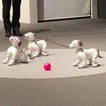 ソニーのエンタテインメントロボット「aibo(アイボ)」が復活します。自律的に人に近づき人に寄り添う…