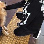 今日ハ犬ノ日ラシイデス(「゚Д゚)「ガウガウ #FINDカミカゼ#myherofindyou#怖…