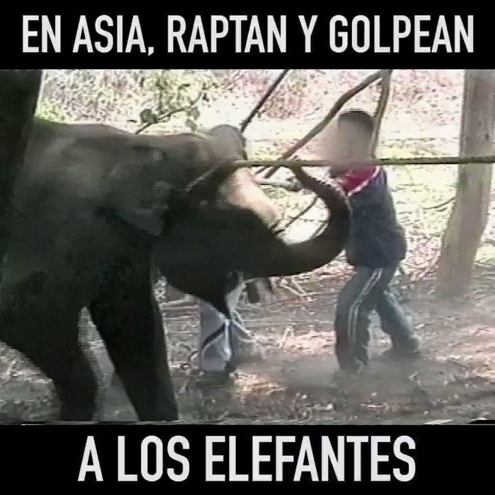RT @PETA_Latino: Esta es la verdad detrás de las fotos de paseos sobre elefantes que vez en Instagram. 😢 https://t.co/Kmr3aQyBQ7