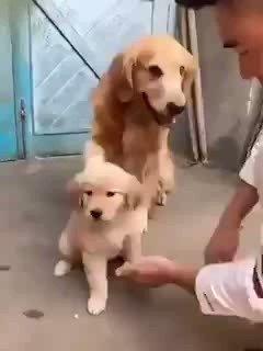 RT @MichelPesquera: Si te quiero... pero no lo toques...😍😍😍 https://t.co/gbBrc4W1dP