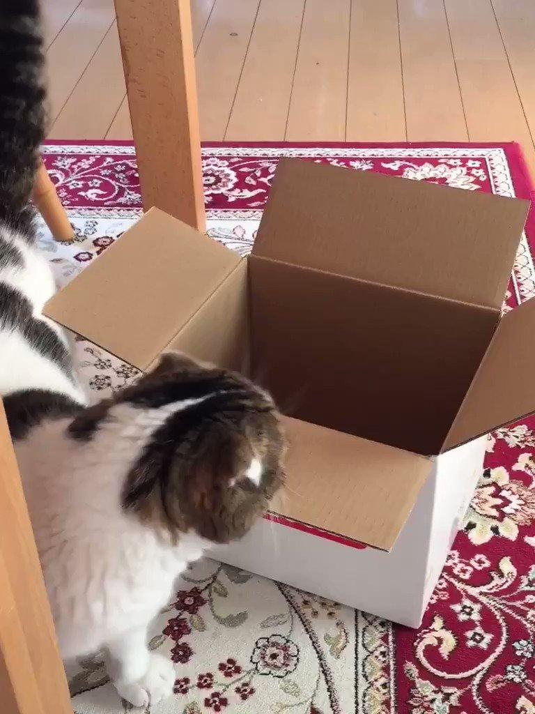 どんなに小さい箱📦でも、取り敢えず入ってみる。 pic.twitter.com/VA3BjO9drE