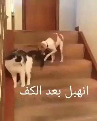 RT @AlkofahiGhaleb: #Twitter friends have a wonderful time ❤️😍🌹🐈🐩❄️☃️ https://t.co/heLWmr0SLW