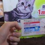 月曜の朝ですが昨日弟が撮った猫動画をどうぞ pic.twitter.com/HQzlt80N4l