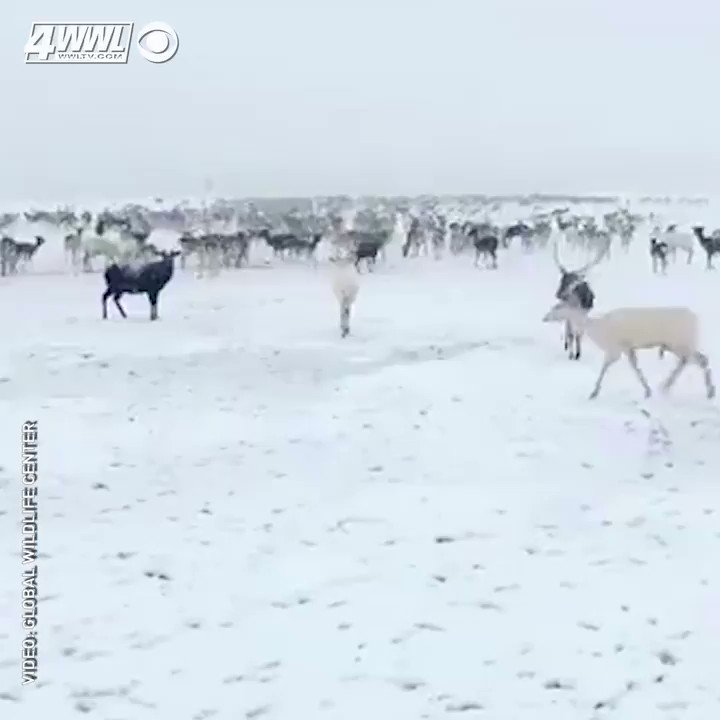 No this was not filmed at the North Pole...