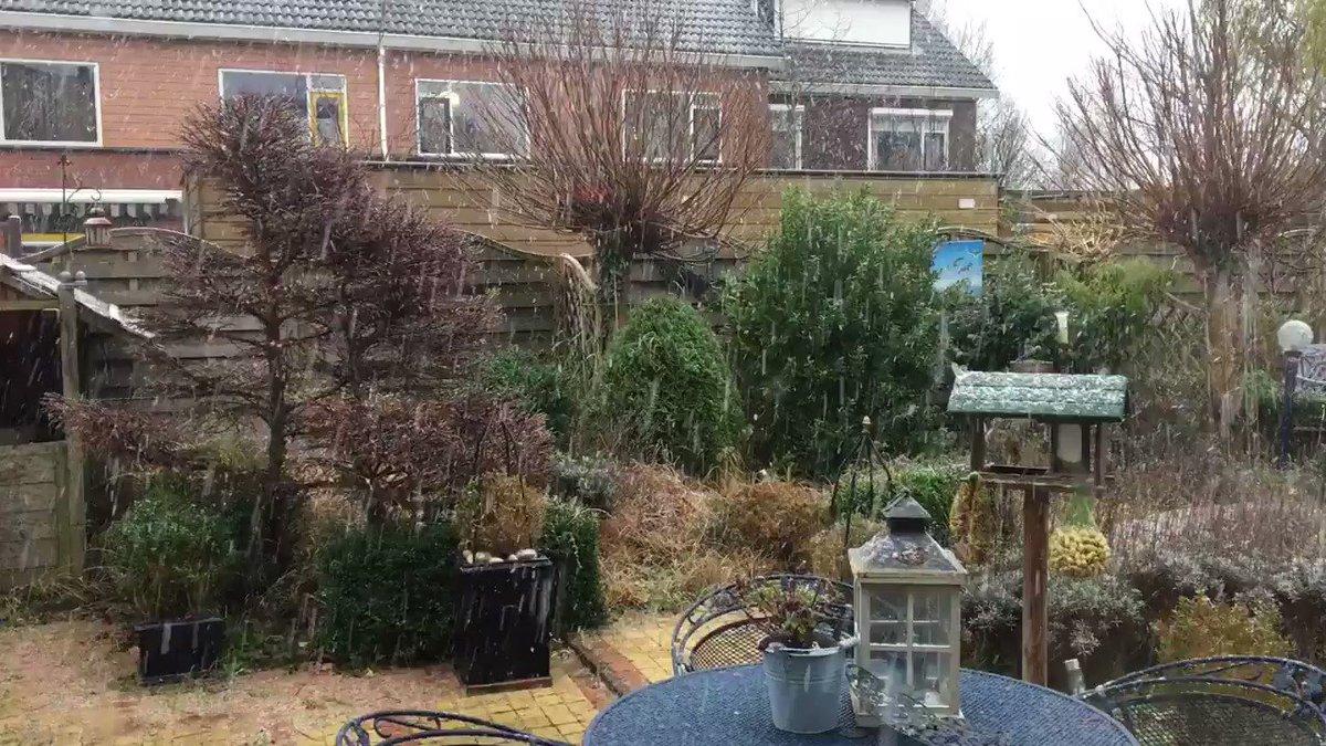 Langzaamaan blijft de #sneeuw een beetje liggen in #Hellevoetsluis. @EdAldus @BuienRadarNL @GerritHiemstra @vid