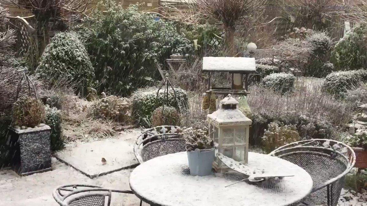 Het wordt steeds witter in #Hellevoetsluis. Let ook even op het #roodborstje en de #merel. Hoezo winters beeld? #sneeuw #winter @EdAldus @BuienRadarNL @VroegeVogels