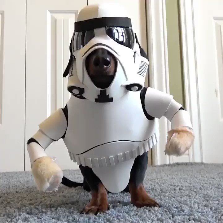 The newest Star Wars character - WienerTrooper, whos quick to shoot up Rebel ankles. #StarWarsTheLastJedi #starwars #wienertrooper