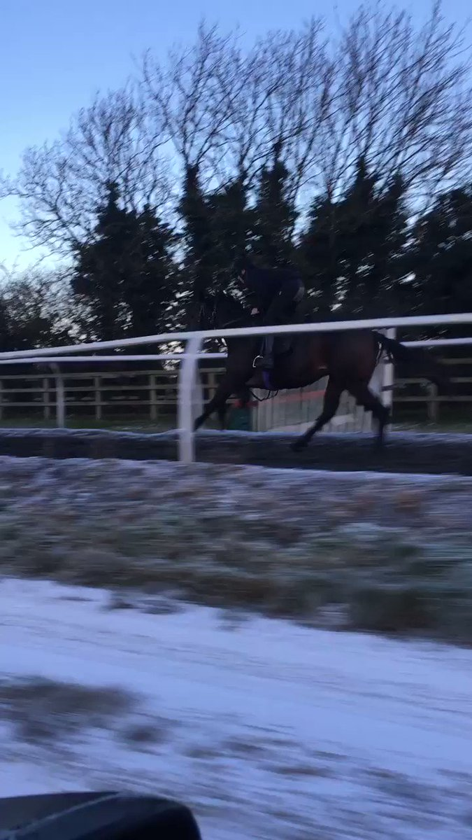 Son of Garswood out of Topflightcoolracer cantering this morning. Shares available in Highclere Ganton Syndicate Phone 01488 669166 for more details!