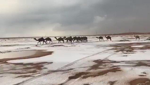 RT @8AoGNVwwpdjuRNl: جمال #الإمارات تتجول في صحراء ثلجية، الثلوج في إمارة #رأس_الخيمة. /الخليج @weather_badr https://t.co/9zjdJwr5nF