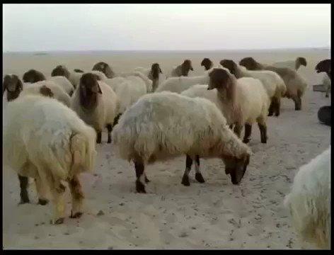 RT @SalemAlSehman: قصة عمر بن الخطاب رضي الله عنه والراعي /مؤثرة https://t.co/pgSr3qKJCC