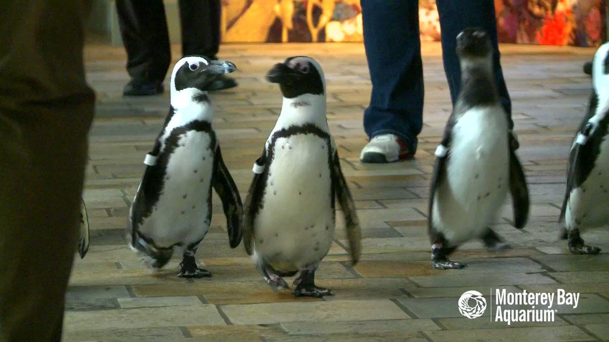 гифка с пингвином про пятницу сохранить чувства