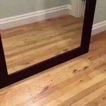 可愛すぎかよ鏡に突然映った自分に驚いてる犬