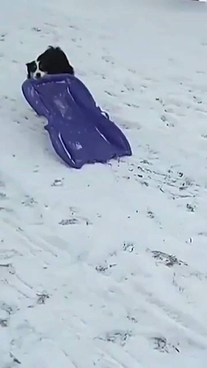 RT @CaraMiaSG: Meanwhile, in New England... 😂  #snowday #grayson 🌬❄️ #bombcyclone #dogsoftwitter https://t.co/srBVDoHJjm