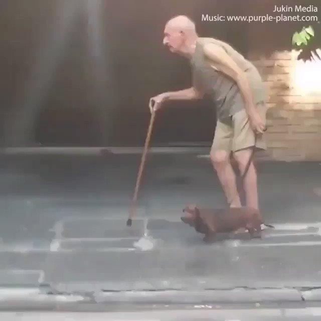 飼い主のペースに合わせて歩く犬 優しさと愛を感じました。