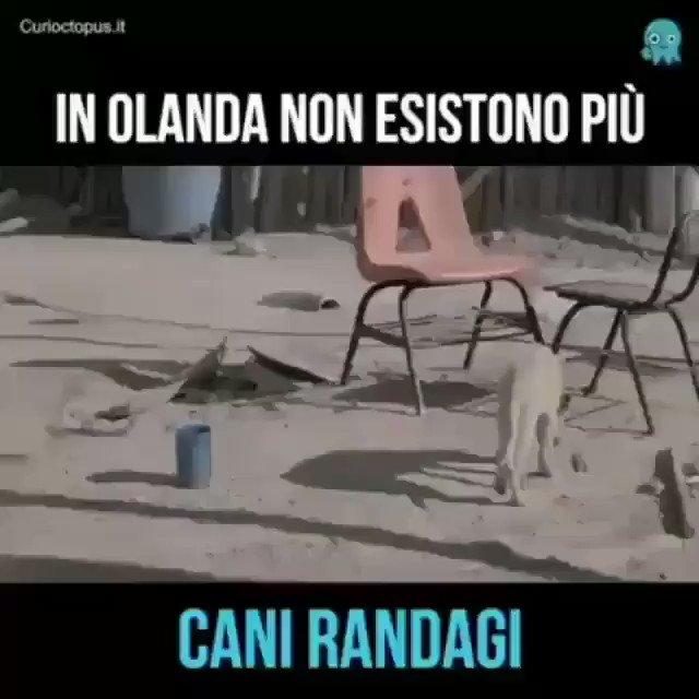 IN ITALIA COSA ASPETTIAMO??? 👍🐕🐕🐕 https:...