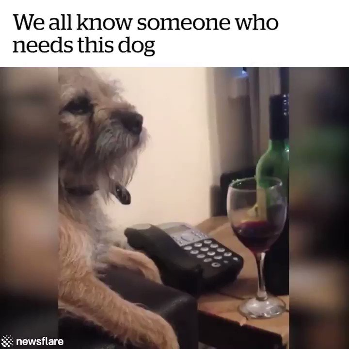 #TuesdayThoughts Just one more... 🙏🏼🍷😂 #wine #winelover #dogsoftwitter @TheWiningHour @winegal57 @DemiCassiani @suziday123 @onceuponawine_ @SashaEats @boozychef @winewankers @KellyMitchell @LoriMoreno @Dracaenawines @hmgivingsoul @SteveKubota @RealWineGuru @KitchenSprout