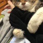 行ってほしくない~!そう言いたげなネコが主人にとる行動がかわいすぎる!