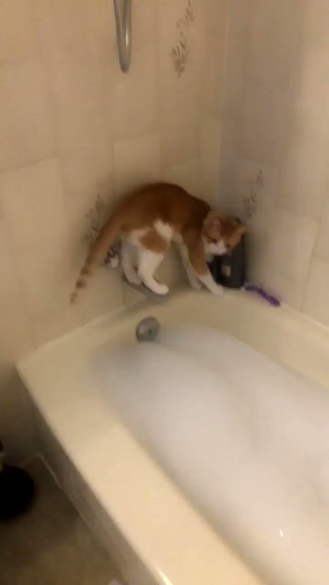RT @_kretch: I hope you all enjoy this video of my cat being an idiot as much as I do https://t.co/6QyQBIqjw6