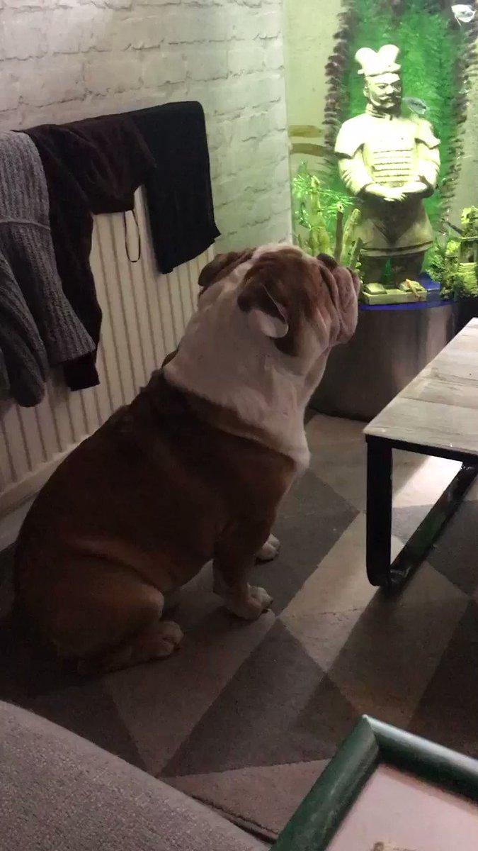 Rufus loving #BritainsFavouriteDogs http...